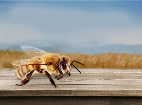 Bee on the wooden desk