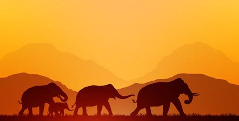 silhouette elephants on blurry sunrise background