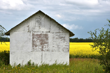 Old Wooden Granary and Canola Field