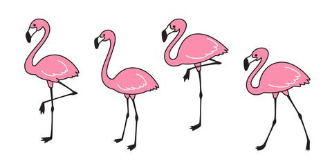 flamingo vector set Cute flamingos collection Flamingo animal exotic nature wild fauna illustration