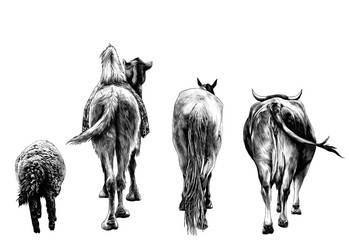 set of animals from the back of a sheep camel horse and the cow and the ass go ahead