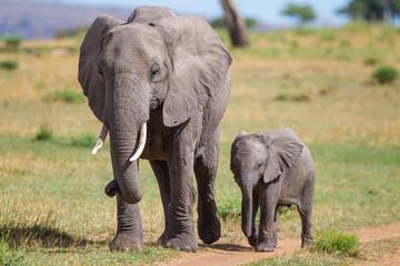 Elefante con cucciolo nella savana del Serengeti in Tanzania