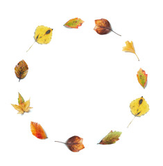 Colorful Autumn Leaves In A Shape Of A Circle