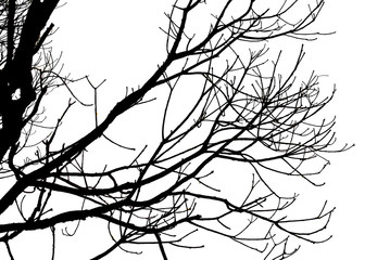 Death tree branch isolated on white background for make tree brush tool and decorate image.