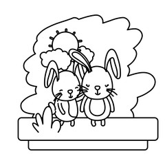 line couple rabbit nice wild animal