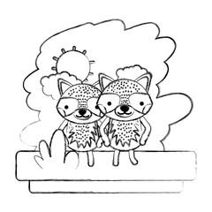 grunge couple raccoon cute wild animal
