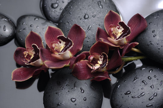 spa concept –lying on orchid and black stones
