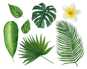 Hand painted watercolor tropical leaves: monstera, palms, plumeria, hibiscus and frangipani flower