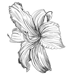 Vector hand drawing flower 1
