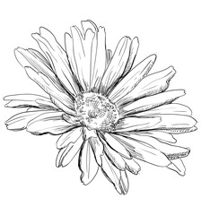 Vector hand drawing flower 3