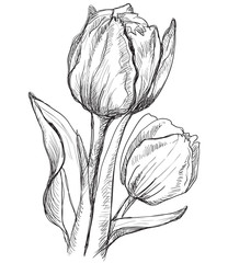 Vector hand drawing flower 10