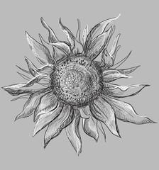 Vector grey flower 7