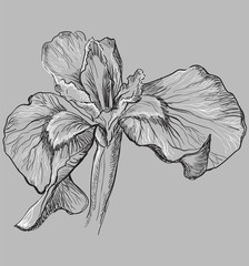 Vector grey flower 9