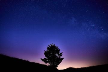 Mt. Tam night sky tree