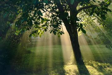 Sun rays nature magic.