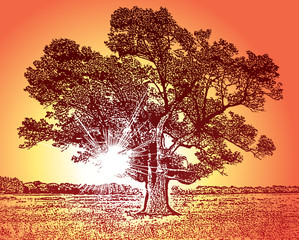Sunny landscape with beautiful tree silhouette and bright light rays. Vector graphic illustration of a forest nature and sun.