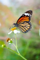 Closeup butterfly on flower in garden