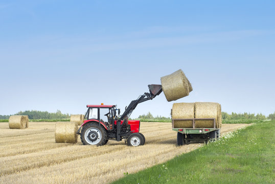 Harvesting of agricultural machinery. The tractor loads bales of hay on the machine after harvesting on a wheat field