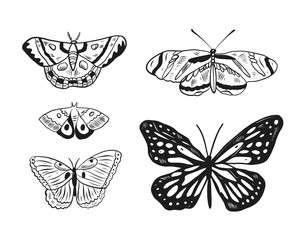 Butterfly hand drawn vector illustration. Isolated on white background.