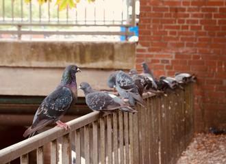 Tauben auf dem Geländer
