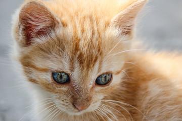 Macro of orange tabby kitten's head with intricate patterns in its eyes