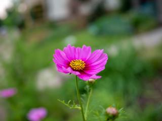 Pink flower with blur green background.