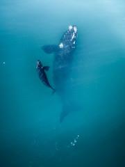 Australia - Whales 02