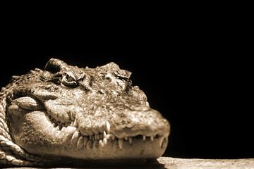 Crocodile head on a black background in sepia colors