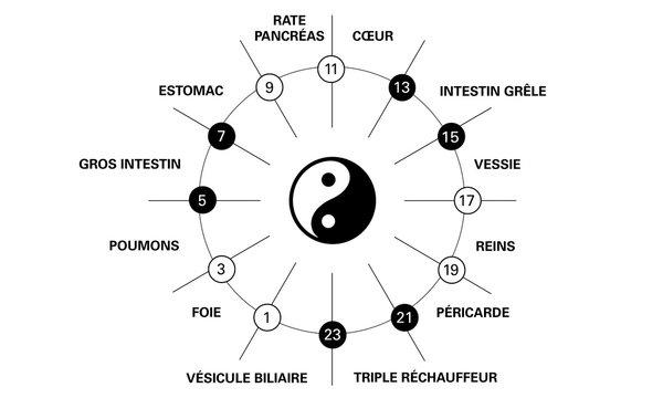 Horloge circadienne des principaux méridiens du corps selon la médecine chinoise avec indication polarité yin yang et organes humains sur une horloge de 24 heures. Noir représente yin, blanc est yang