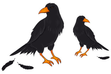 two black Birds Ravens Crows Hugin and Munin