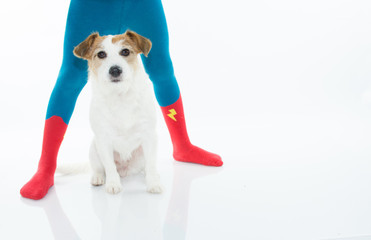 JACK RUSSELL DOG SITTING BETWEEN CHILD LEGS WHO IS WEARING HERO SOCKS OR TIGHTS