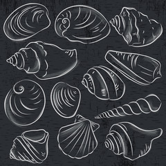 Set of different types of clams and shells on blackboard background, vector illustration.
