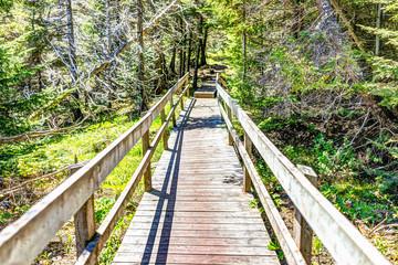 Trail hiking in Bonaventure island by Perce, Quebec in Gaspe, Gaspesie region with wooden bridge boardwalk