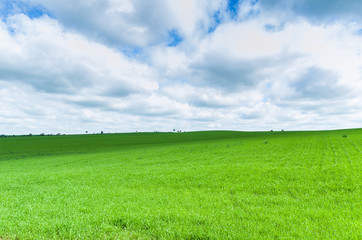 Beautiful landscape of green field and cloudy sky