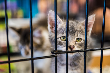 Portrait of one tabby grey kitten looking through cage behind bars waiting for adoption