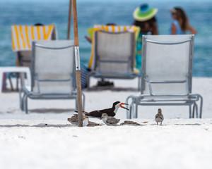 Birds find shade under lounge chair