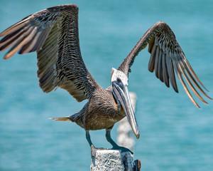 Pelican landing on pylon