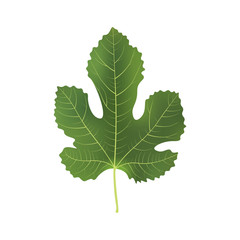 Realistic 3d Fig Leaf. Detailed 3d Illustration Isolated On White. Design Element For Web Or Print Packaging. Vector