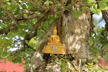 Golden Buddha under the Bodhi Tree