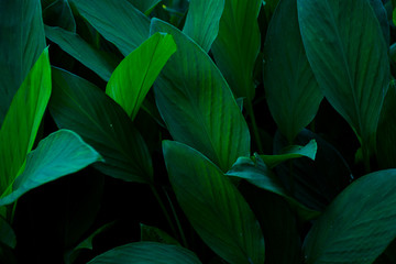 green leaves background. nature concept.