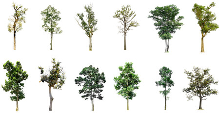 Collection of tree isolated on white background high resolution for graphic decoration, suitable for both web and print media