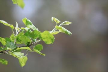 Leafy Sprigs