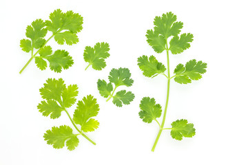 parsley leaf vegetable ingredient herb nature on white background