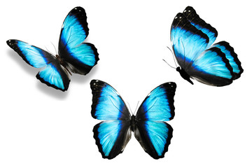 набор синих бабочек изолированно на белом фоне.