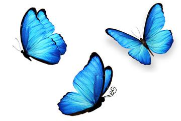 три синих бабочек изолированно на белом фоне.