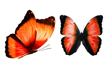 set of red butterflies isolated on white background