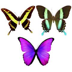 на белом фоне разноцветные бабочки