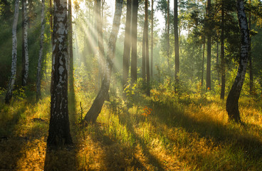 Walk in the autumn forest. Morning. Sun rays.