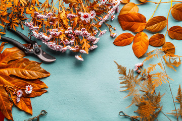 Autumn flowers decoration and flowers arrangement background with yellow leaves and pink flowers on turquoise desktop , top view. Autumn florist work space. Fall layout frame with  copy space