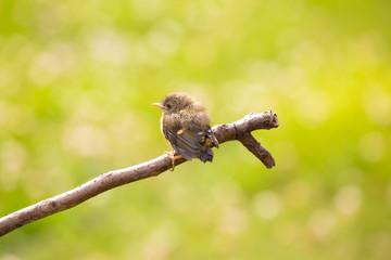 Cute baby bird on a branch